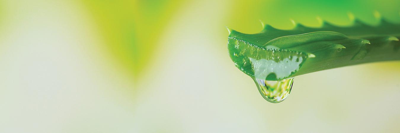 banner-green-line-naslovni-kolaz-sestavin-1350x450px-BT